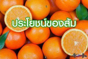 ส้มเนื้อหวาน และ ประโยนช์1